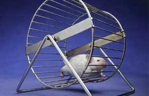 rat-wheel