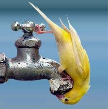 water canary